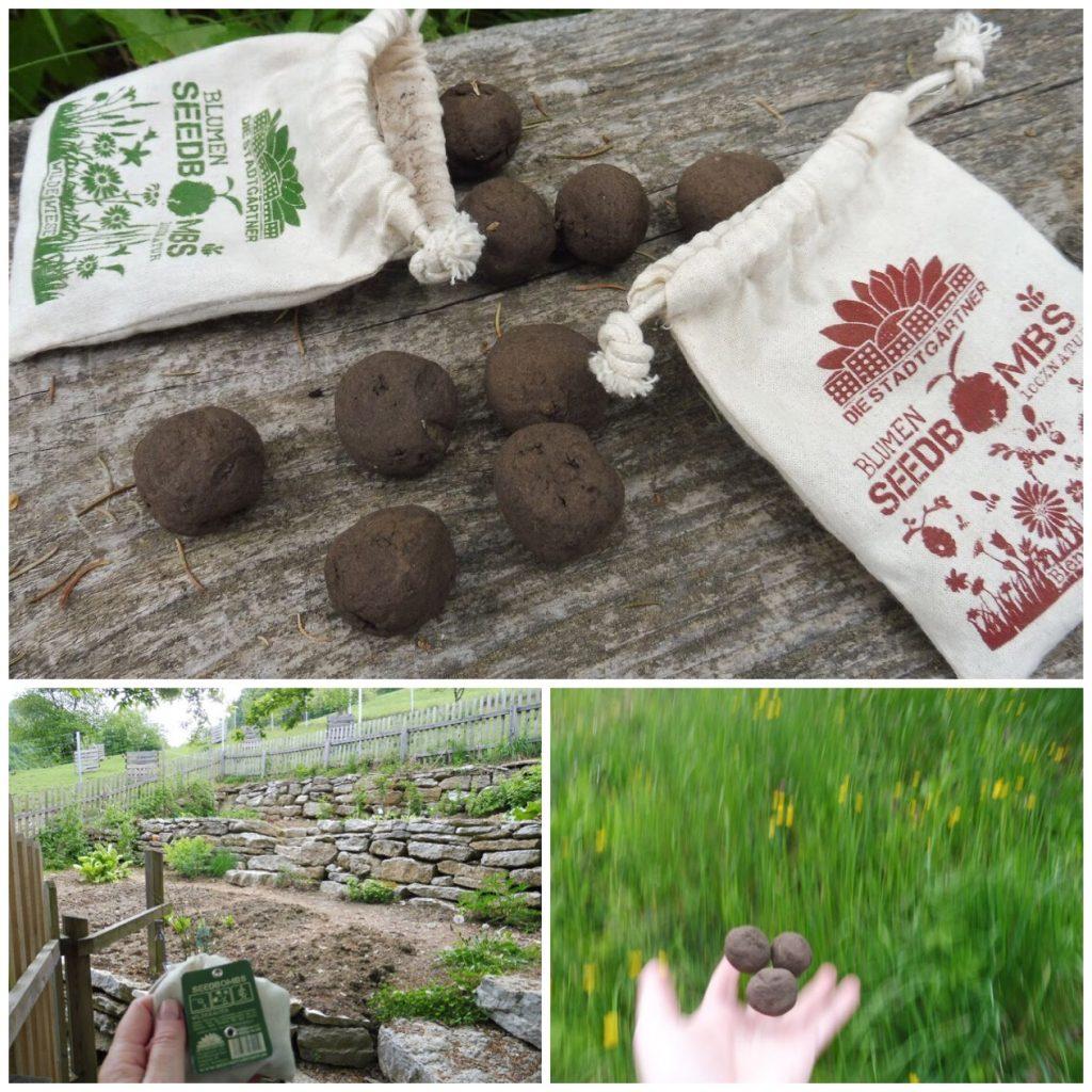 Fotos von Samenbomben, die bei Astrids Imkern explodieren dürfen.