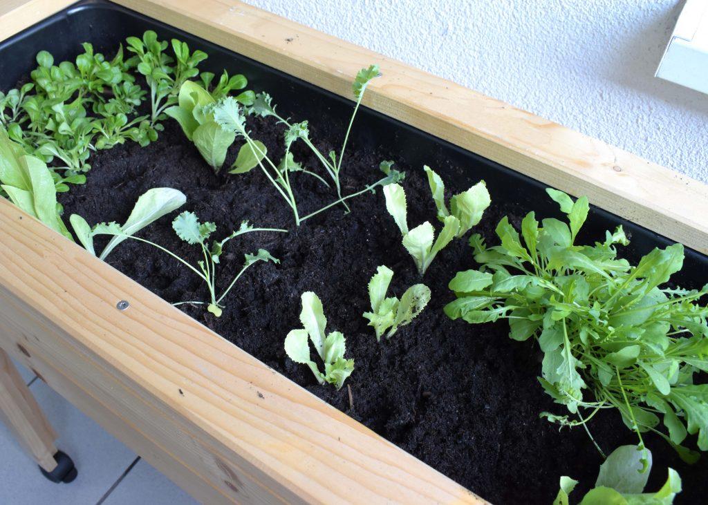 Minihochbett im Herbst beflanzen