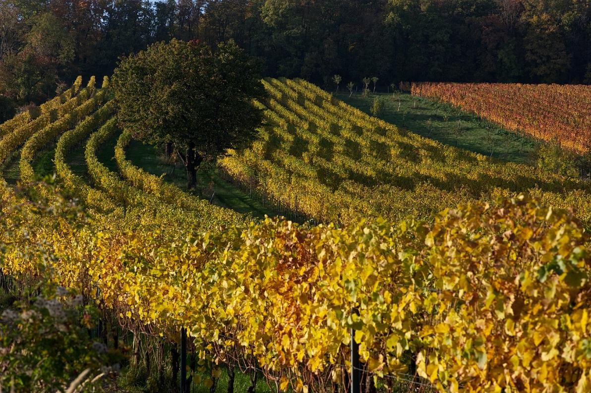 Wie könnte ein Wein aus dieser Gegend nicht hervorragend schmecken? (Bild: Klaus Gaggl)