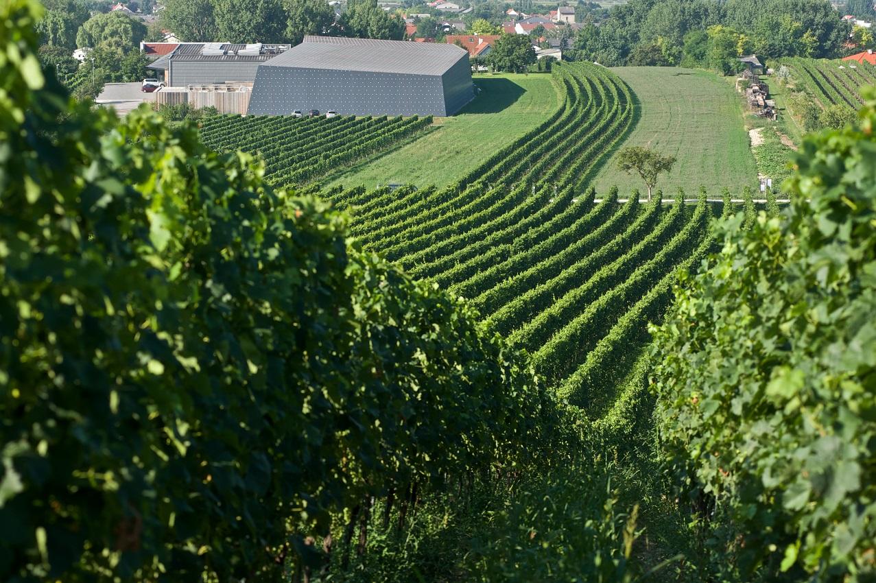 """Was für eine Lage - das """"Weingut Heinrich"""" in Gols im Burgenland (Bild: Weingut Heinrich)"""
