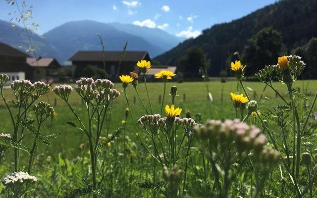 Mit dem Mountainbike durch Osttirol. (C) Florian Warum
