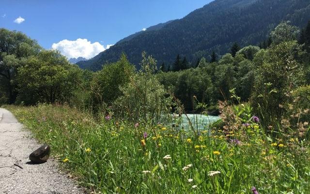 Der Isel-Radweg führt entlang des Flusses, an dessen Ufer es - mit oder ohne Mountainbike - immer wieder ewas zu entdecken gibt. (C) Florian Warum