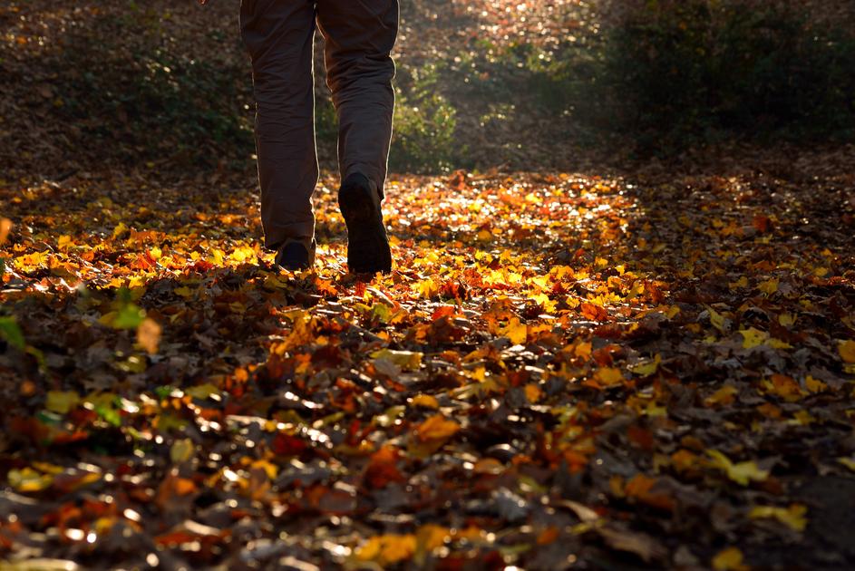 Spaziergänge in der Sonnen helfen den Botenstoffen im Gehirn auf die Sprünge