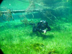 Die Unterwasserwelt hinterlässt faszinierende Eindrücke. Foto: Dr. Frank Hartig