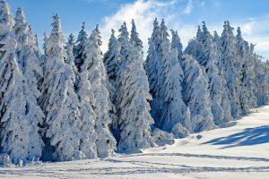Auch durch die winterliche Kälte werden die Augen einer enormen Belastung ausgesetzt. Foto: Pixabay