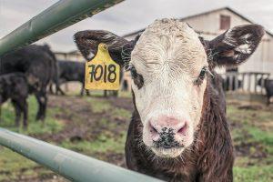 Die Folgen unseres Fleischkonsums