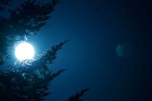 Mond-Christbaum: Tannen halten deutlich länger als Fichten