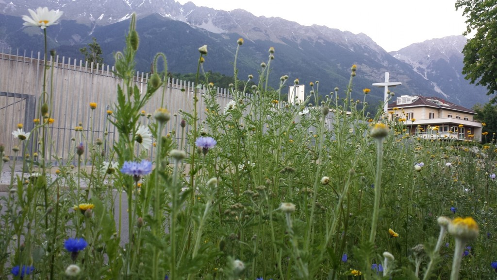 Leider hatte ich bei meiner heutigen Wanderung keine Kamera dabei. Aber hier ein Sinnbild für zivilisierte Natur. Aufgenommen in Innsbruck (Tirol).