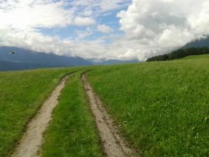 viele Kräuter findet man auf den Feldern rund um Innsbruck