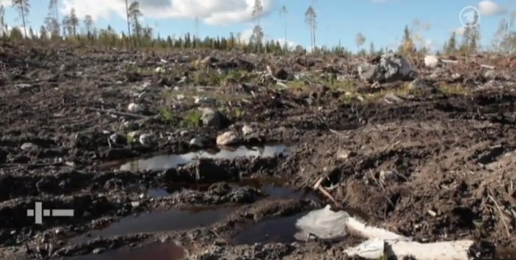 Diese Wunden werden jahrzehntelang nicht mehr heilen. Der nordische Urwald ist nachhaltig zerstört. Der Gier eines Konzerns zum Opfer gefallen, der bei uns auf Du und Umweltschutz macht.
