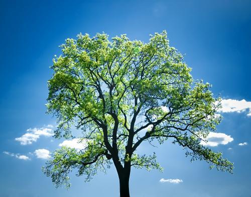 Die Welt und die Bäume retten? Ja, klar. Aber bitte mit viel Aufmerksamkeit.
