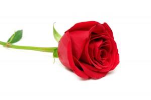 Klischee hoch zehn: eine rote Rose als Erkennungszeichen