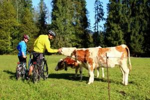 Ein Ausflug um Tiere beim Erlebnisbauernhof Erharthof zu streicheln