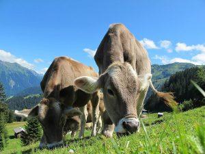 Eine Almidylle, wie sie in Tirol noch zu finden ist. Wer das so behalten will, muss auch heimisches Fleisch beim Metzger kaufen.