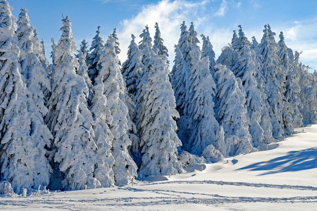Winterfrische ist, wenn der Spaziergang durch einen winterlichen Märchenwald führt.