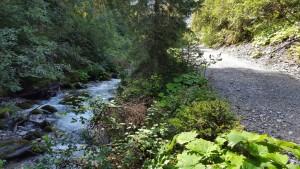 Ideale Voraussetzungen für Pilze und Beeren. Feucht und nahe am Weg. Kartitsch in Osttirol.